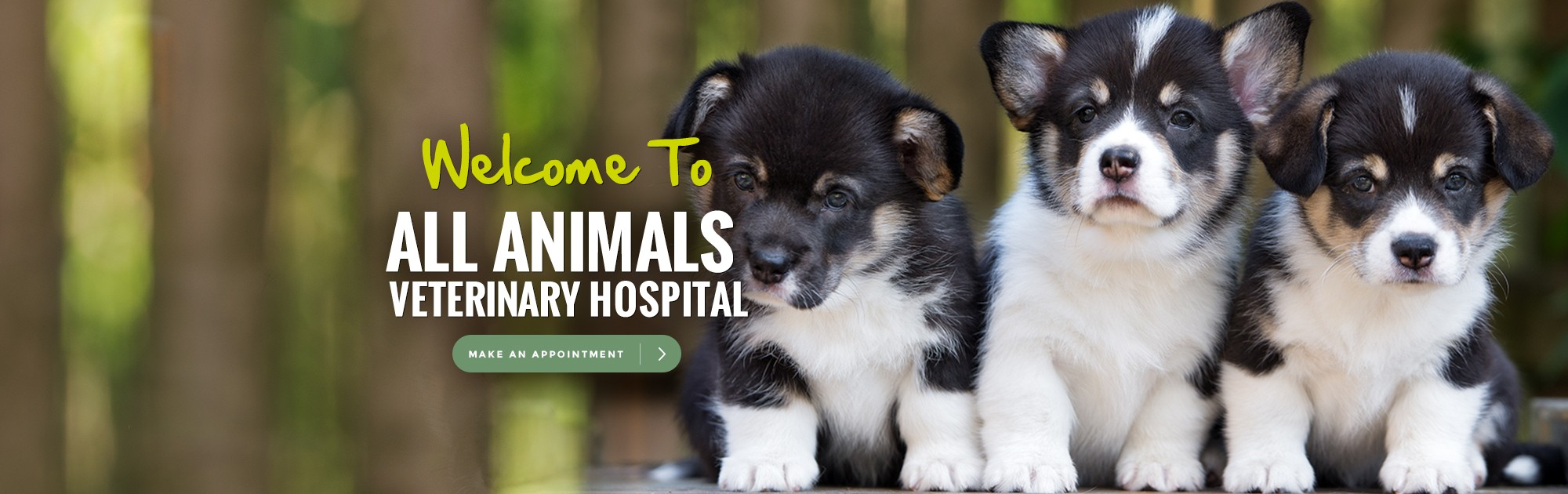 Welcome to All Animals Veterinary Hospital. Make an Appointment